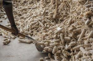 Corn Production and Harvest Uganda Africa0045 960x638