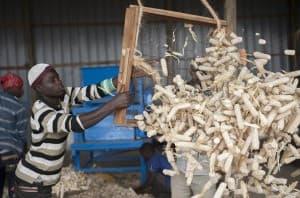 Corn Production and Harvest Uganda Africa0046 960x635