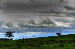Lake Naivasha Plains Kenya Africa 0062 960x638