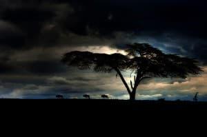 Naivasha Sunset with Wilderbeast Kenya Africa 0061 960x638