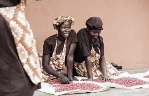 Shea Butter Producation Gulu Uganda0034 960x619