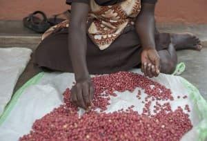 Shea Butter Production Gulu Uganda 0047 960x654